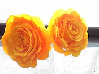 オレンジ2.JPG